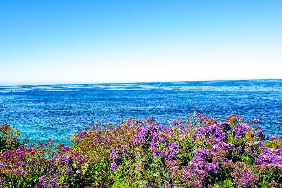 San Diego beach with wildflowers