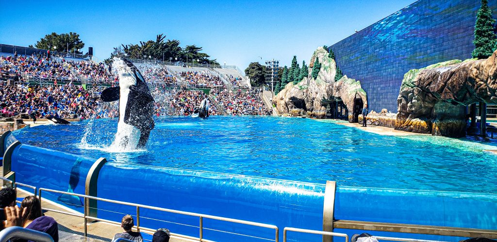 Whale jumping at Sea World